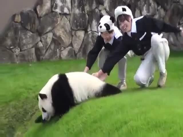 Сотрудники зоопарка помогают панде
