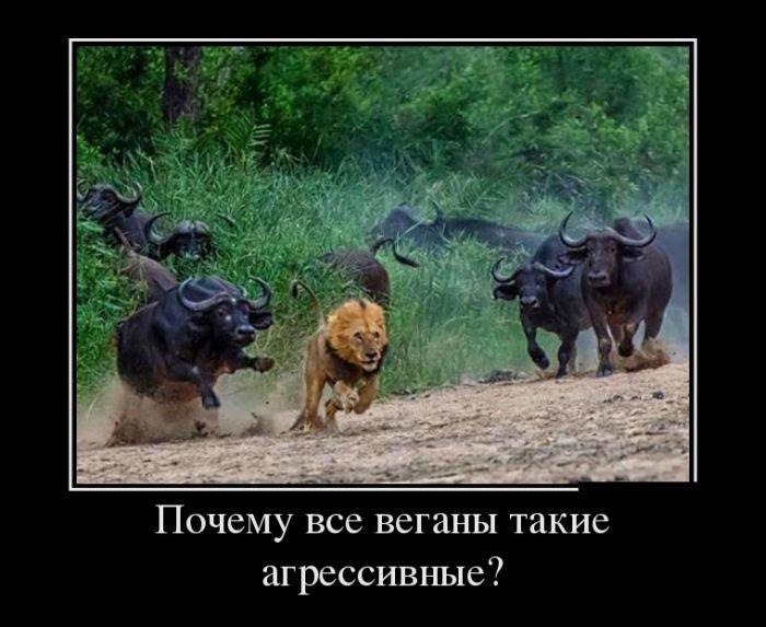 http://mainfun.ru/uploads/images/01/71/15/2015/12/05/c23246.jpg