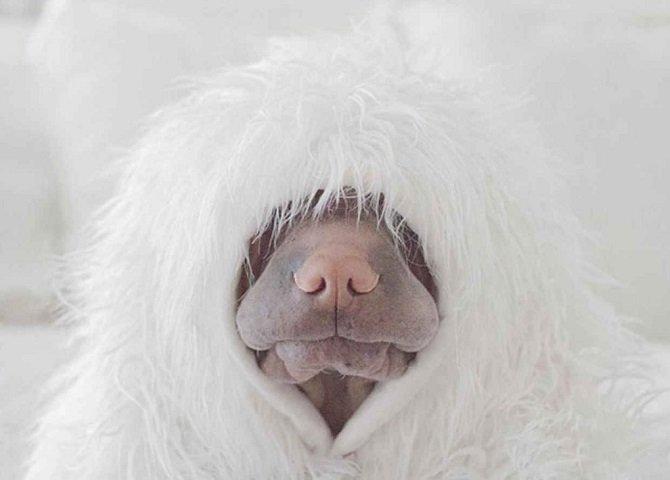 Рассказ об одной из самых редких пород собак
