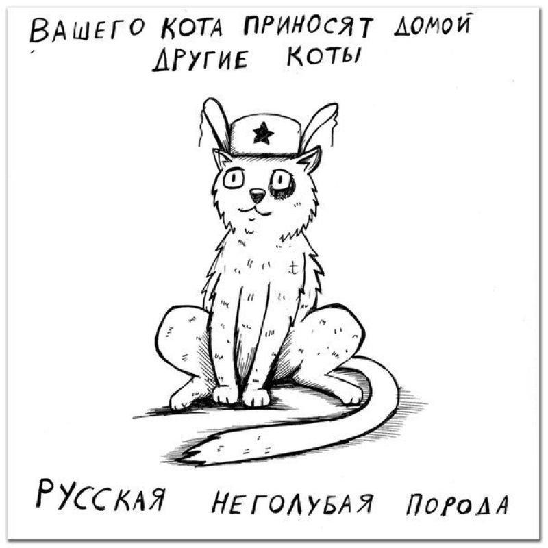 Порода кошки по ее характеру (10 фото)