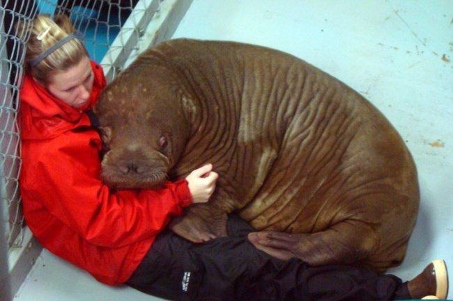 12 эмоциональных животных