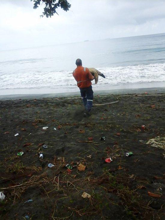 Мужчины спасли уже 10 черепах, покупая их на рынке, чтобы отпустить их обратно в океан (4 фото)