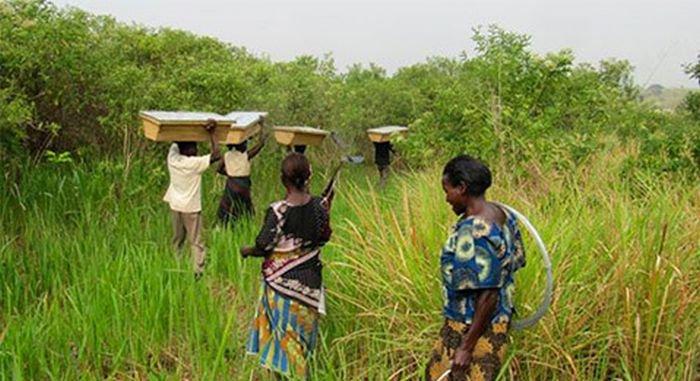 Африканские фермеры защищают поля от набегов слонов (5 фото)