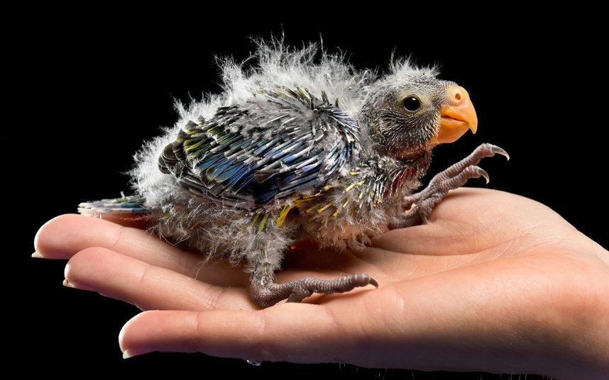 Удивительные фотографии животных