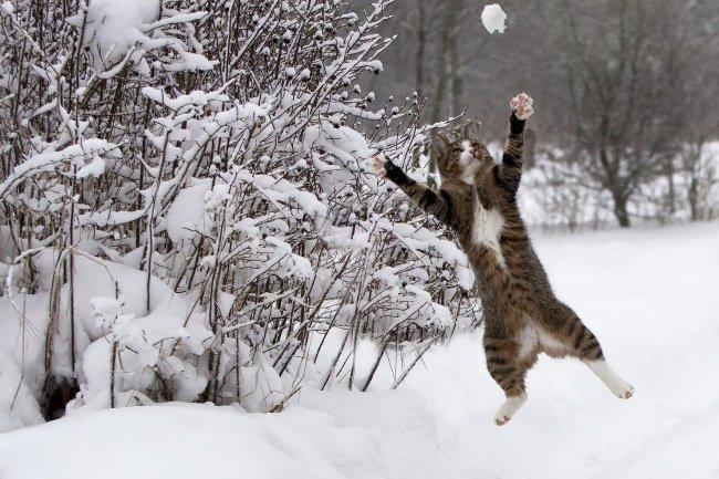 Коты умеют летать! Смотрим и удивляемся (10 фото)