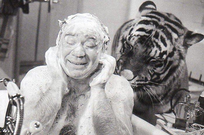 Съемки с тиграми в «Полосатом рейсе» (4 фото)