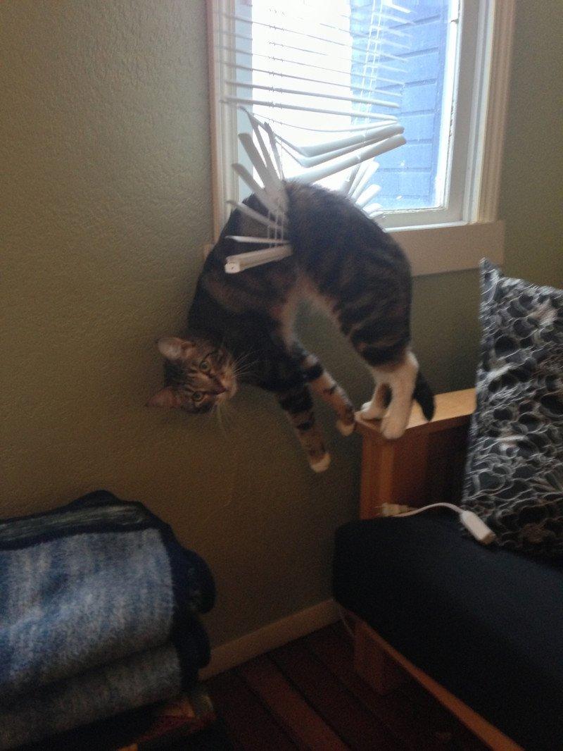 Забавные животные, которые сами загнали себя в ловушку (26 фото)