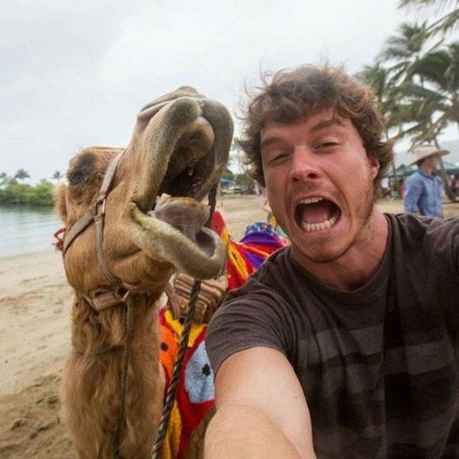 Как делать забавные селфи с животными (12 фото)