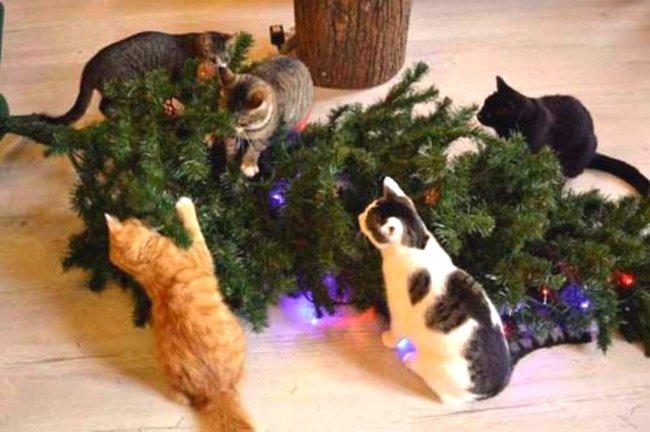 Забавные фотографии питомцев и новогодних елок