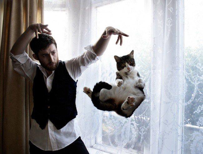 Забавные фотографии котов (19 фото)