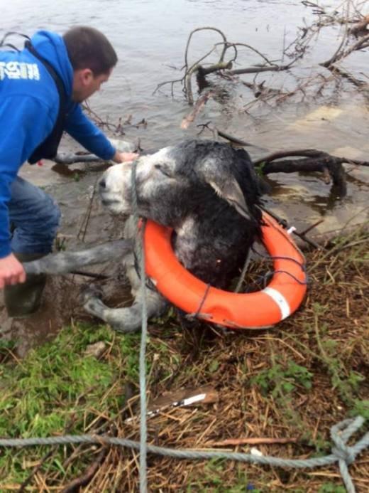 Спасатели вытащили из воды ослика (2 фото)
