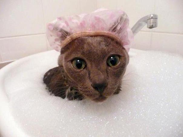 Фотографии котов, которые обожают воду