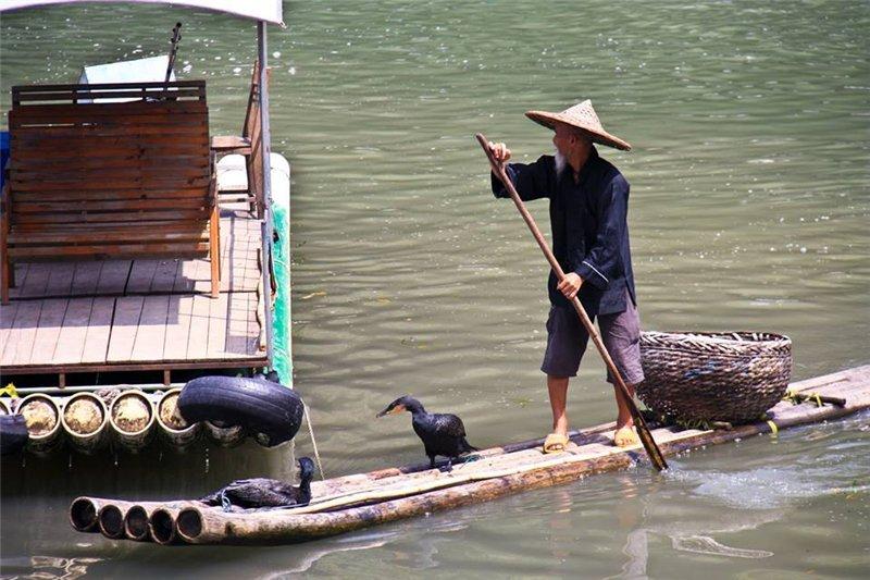 Рыбалка при помощи прирученных бакланов