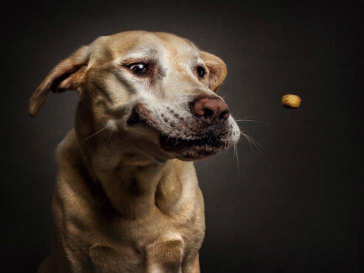 Целая гамма забавных эмоций у собак