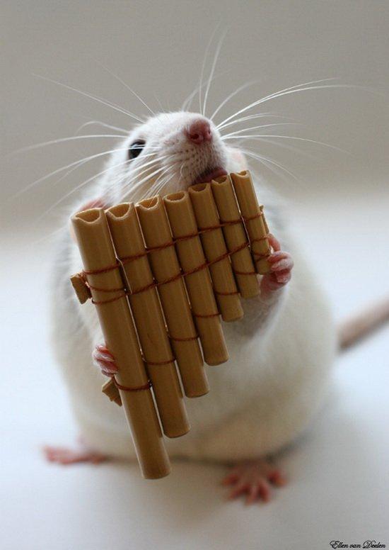 Забавные фотографии где крысы выступают в роли артистов