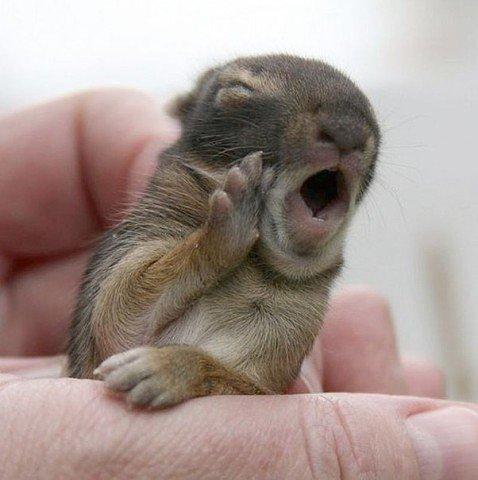 Не зевай!