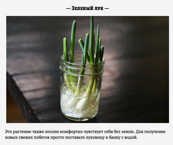 Зелень, которую можно вырастить дома