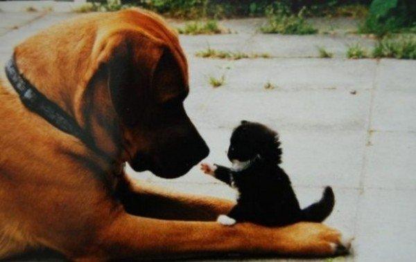 Возраст кошки или собаки в «человеческих» годах