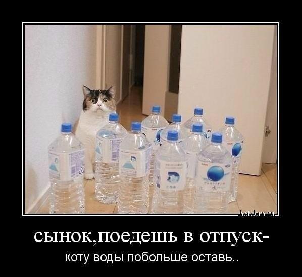 Демотиваторы о кошках (24 фото)