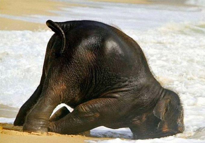 Если бы у животных было похмелье (25 фото)
