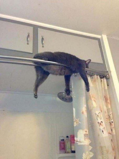 Коты, которые пожалели о том, что сделали