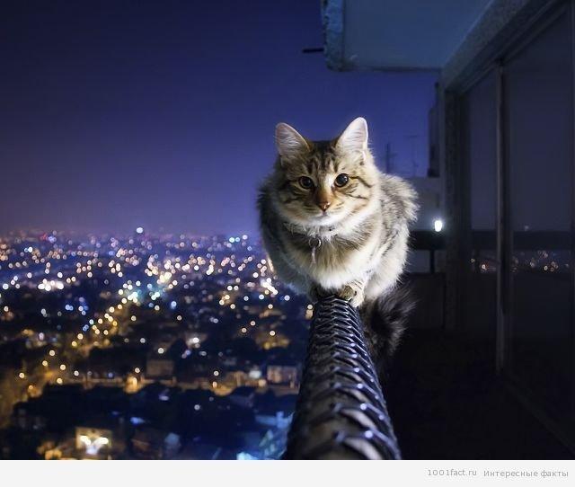 Несколько интересных фактов о кошачьей интуиции