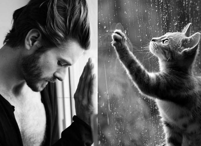 Женские слабости: мужчины и коты
