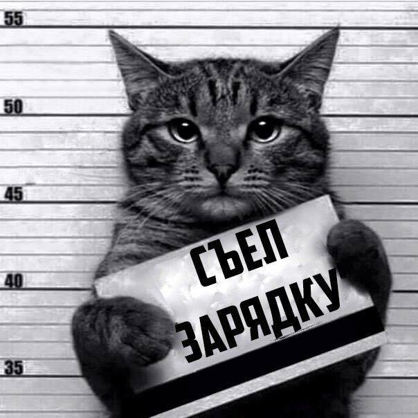 Кот-рецедивист (8 фото)
