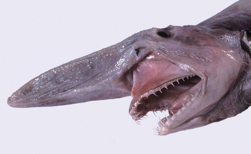 Самые странные акулы в мире