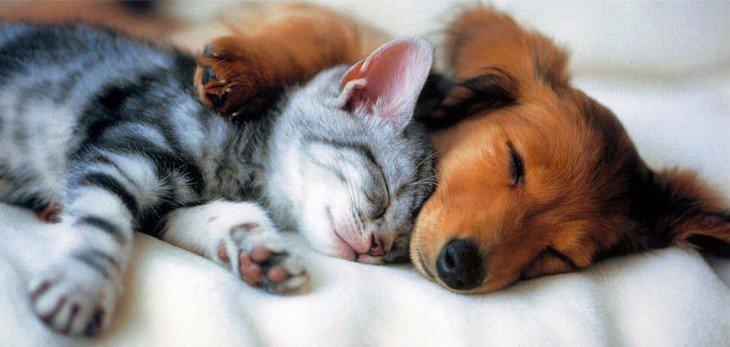 10 странных привычек домашних животных