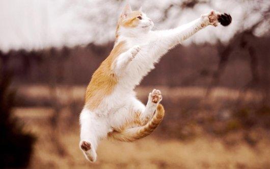 Почему у кошек 9 жизней?
