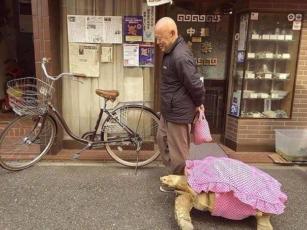 Интересная парочка: мужчина и черепаха