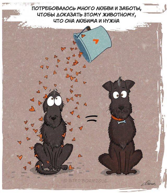 История в картинках: собака из приюта (20 картинок)