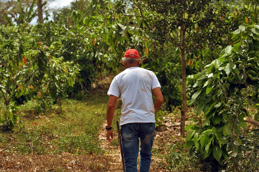 Как бразильцы выращивают органическое какао