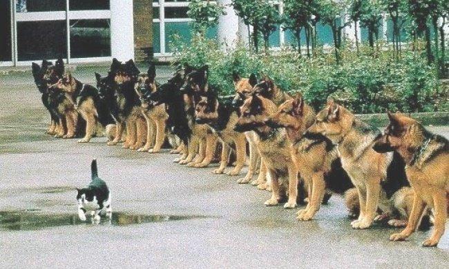 Дисциплина гораздо важнее мотивации