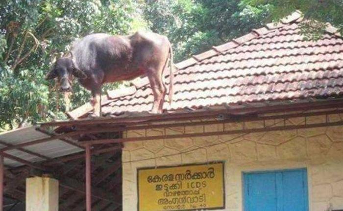 Такая странная Индия (35 фото)