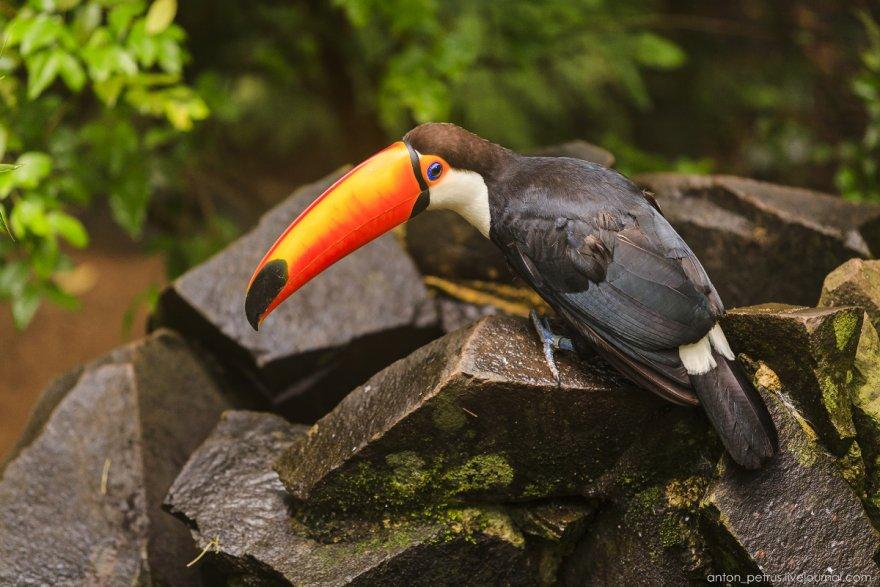 Тропический птичий рай