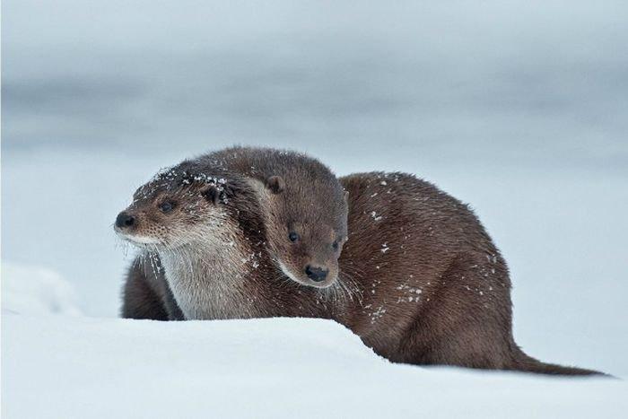 Потрясающие снимки дикой природы