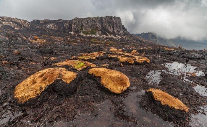 Тасмания пострадала от лесного пожара (16 фото)
