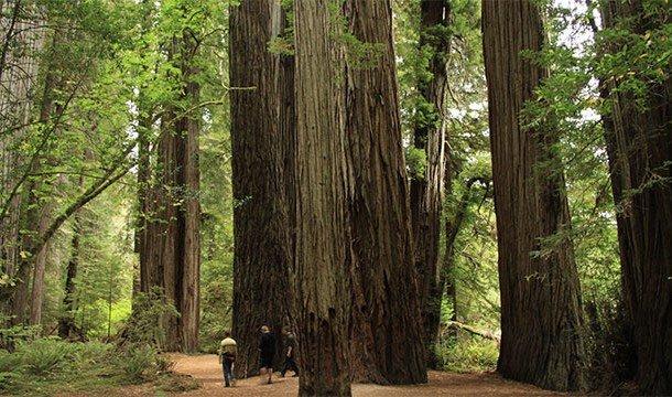 Чего мы не знали о деревьях