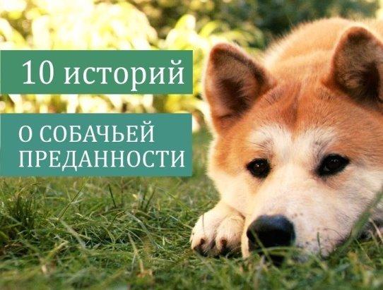 Трогательные истории собачьей преданности