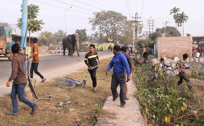 Cлон устроил погром в индийском городе Силигури (6 фото)