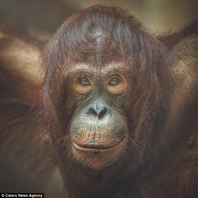 Человек и приматы