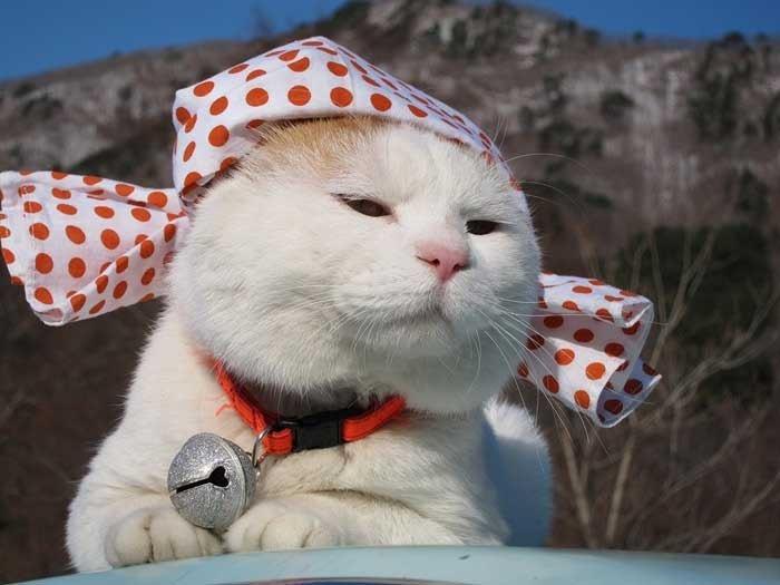 Кот, постигший дзен