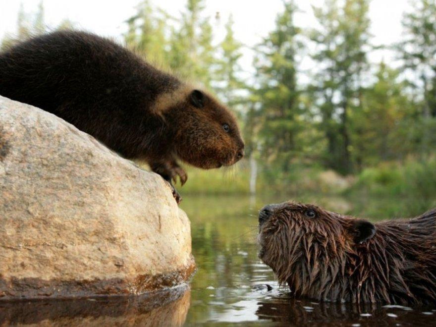 Животные, у которых можно поучиться верности и любви