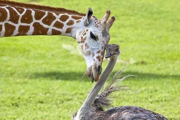10 примеров необычной дружбы
