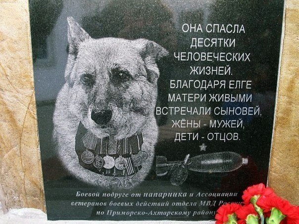 Собака, которая спасла десятки человеческих жизней