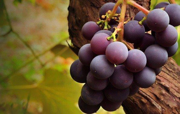 Выращиваем виноград в домашних условиях