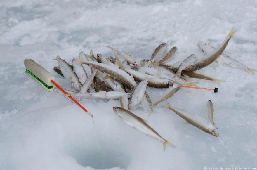 Рыбалка на Колыме