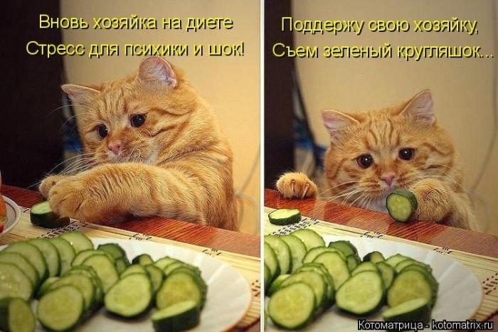 «Пушистые» шутки (50 фото)